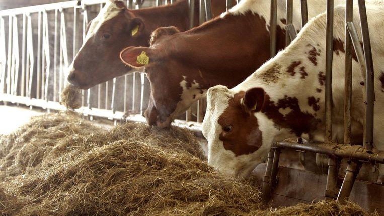 De vetzuren worden 'in zeer kleine hoeveelheden' toegevoegd aan veevoer, voor pluimvee, varkens en koeien met name. Beeld anp