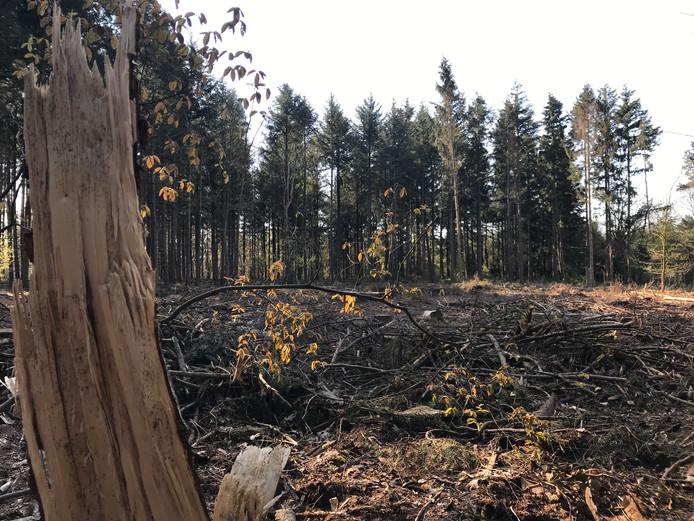 Plek waar veel bomen zijn gekapt in Knegsel