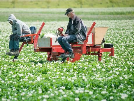 Nieuwe aardappels gaan boeren veel geld schelen
