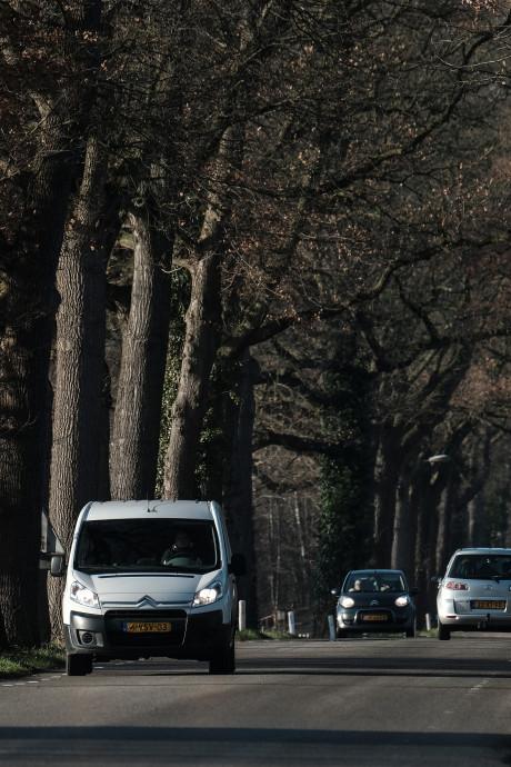 Massale bomenkap in buitengebied Winterswijk
