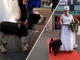 Mied trouwde met allebei haar honden