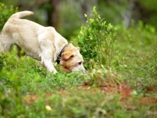 Politie waarschuwt hondeneigenaren voor drugs in Kooisteebos: 'Het kan zijn dat er nog meer ligt'