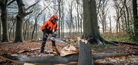 Bossen weer 'veilig' na storm