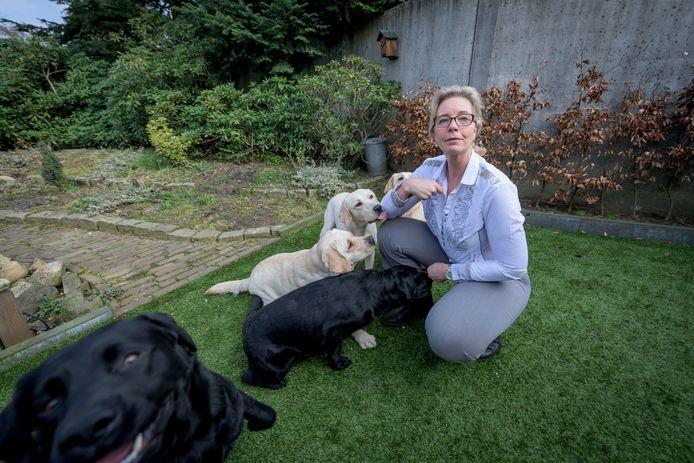 PVV-gemeenteraadslid Jeanet Nijhof wil afschaffen hondenbelasting, foto bij haar thuis met zes labradors waarmee ze fokt.