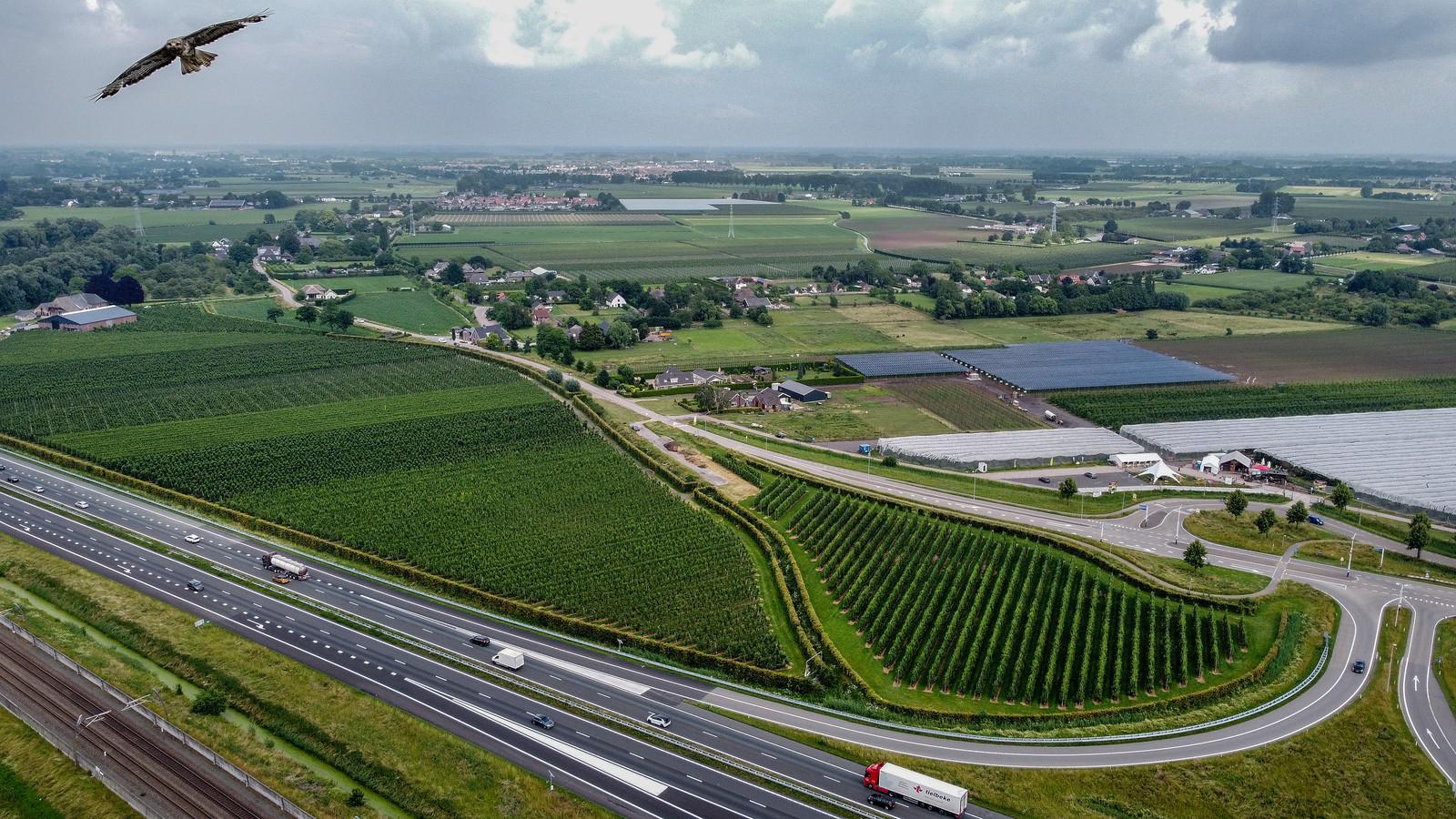 De op-en afrit van de A15 bij Wadenoijen kan het sluitstuk zijn van een nieuwe weg vanuit Tiel-Passewaaij. Een vogel neemt een nieuwsgierig kijkje.
