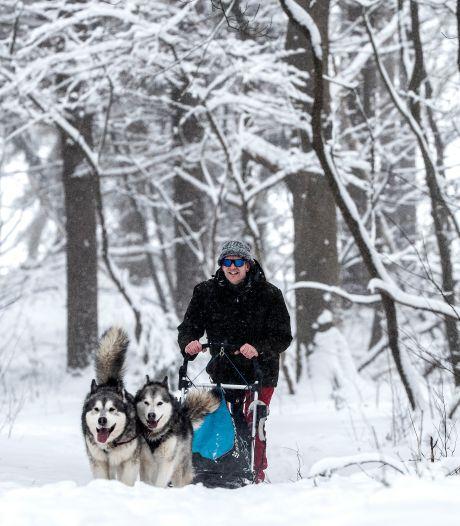 Sleeën met de honden in de sneeuw, het kan gewoon in de Achterhoek: 'Dit is echt uitzonderlijk'