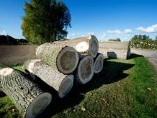 Bomenkap in Weurt direct gestopt