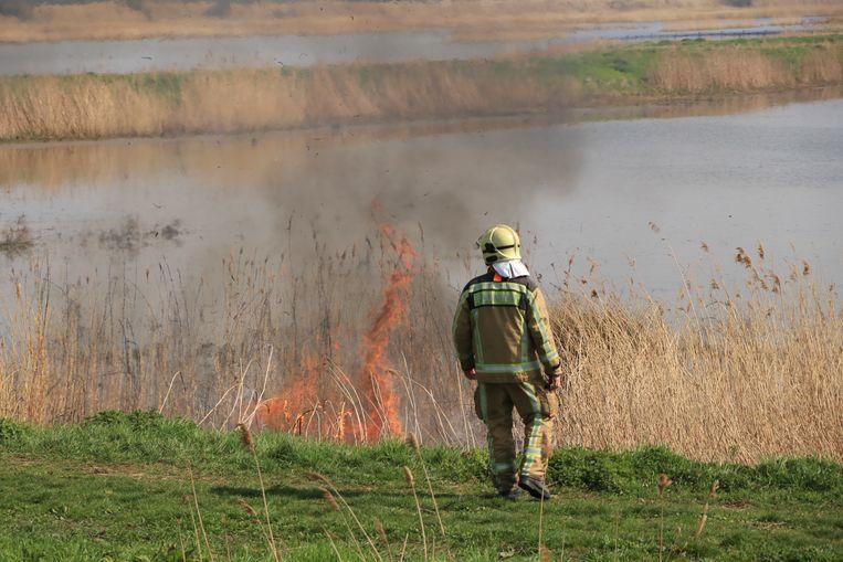 Zo'n 500 vierkante meter riet ging in vlammen op.