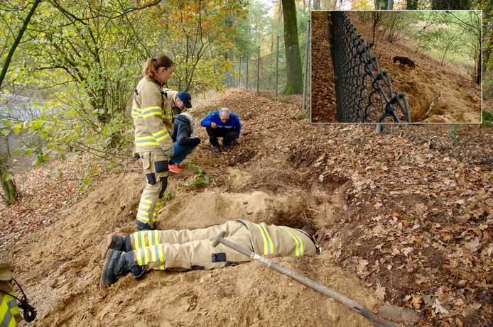 Brandweermannen graven zich een weg door het konijnenhol. Inzet: teckel Knoet nadat de brandweer is vertrokken.