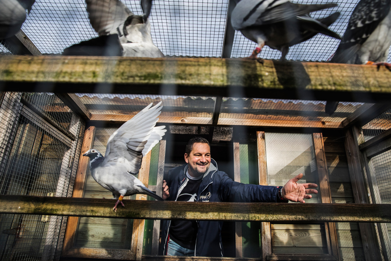 Frederik Leliaert van Pigeon Paradise. 'Duiven zijn, net als bonbons en frieten, een echt Belgisch product.' Beeld Aurélie Geurts
