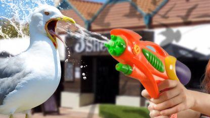 Gasten van Australisch restaurant gaan lastige meeuwen te lijf met waterpistool