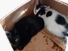 Kittens gedumpt bij dierenambulance in Terneuzen: 'Wie doet nou zoiets'