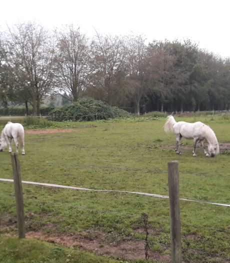 Paard gruwelijk verminkt in geslachtsdeel: 'Het dier moet veel pijn hebben geleden'