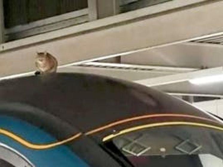 Kat doet een dutje en legt zo Londens treinverkeer lam