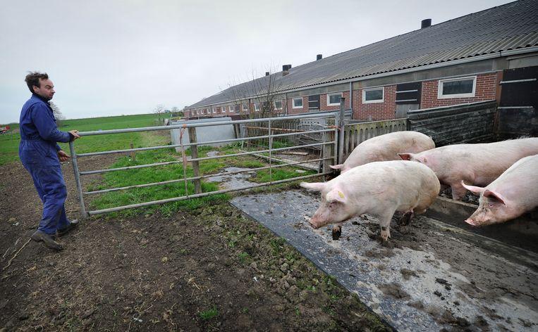 Varkens op een biologische boerderij. De animo voor biologisch boeren neemt af. Beeld Marcel van den Bergh / de Volkskrant