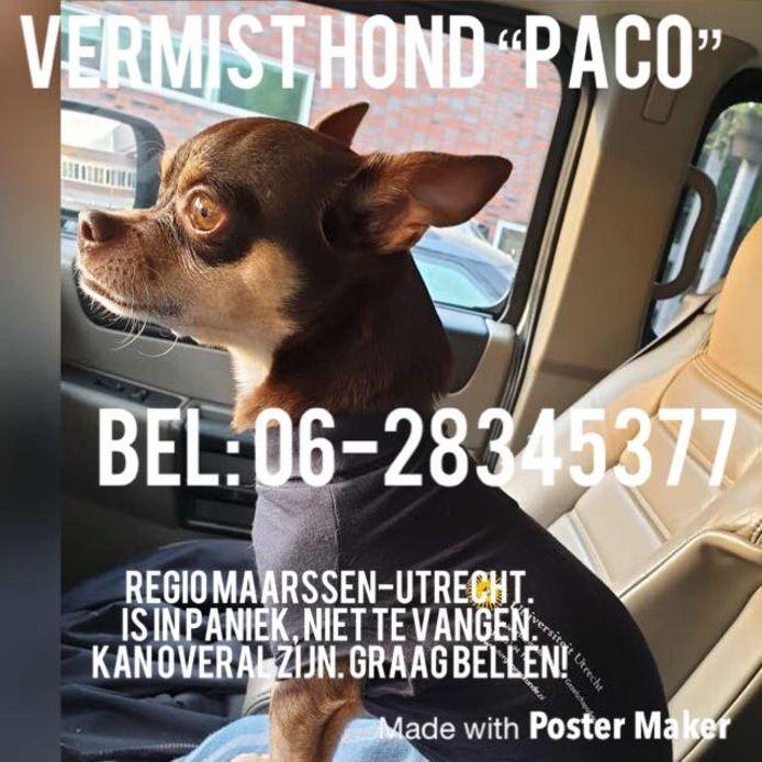 Hondje Paco wordt sinds vanochtend vermist in Maarssen.