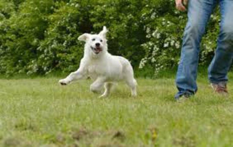 Natuurgebied Het Rood krijgt een loopzone voor honden.