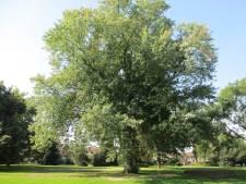 Apeldoorn jaar lang European City of Trees