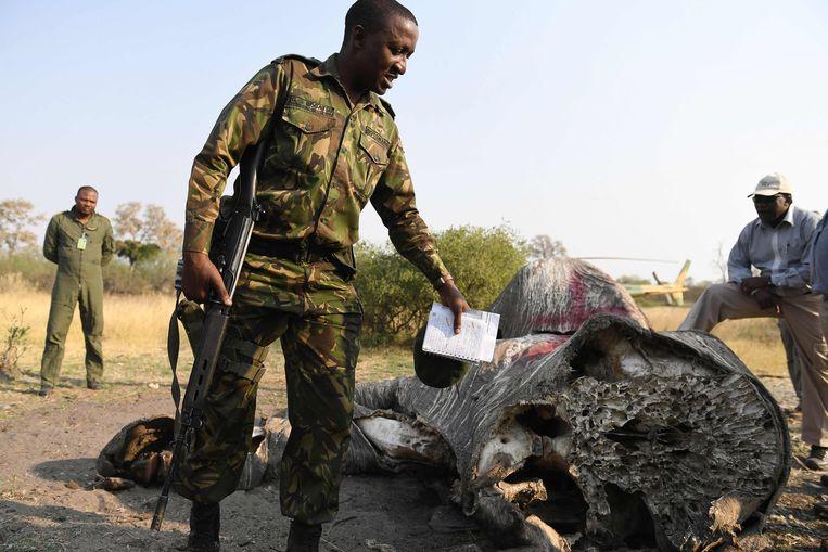 Kolonel George Bogatsu  van Botswana Defence Force toont de resten van een voor zijn slagtanden gestroopte olifant in het Chobe natuurpark in september 2018. Ian Khama is dan een half jaar president af en meteen worden er veel olifanten geschoten in Botswana.  Beeld AFP