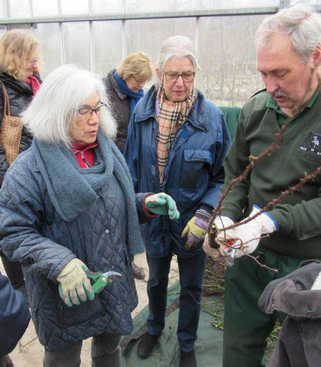 Vier tips bij het snoeien van rozen komend weekend