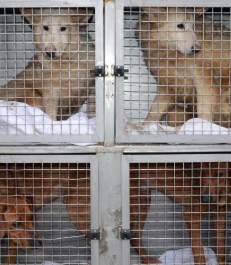 Dierenbescherming na inval bij hondenfokker in Lettele: 'Nog nooit honden zo angstig gezien'
