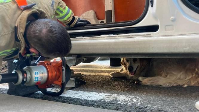 Brandweer helpt hond die vastzit onder auto