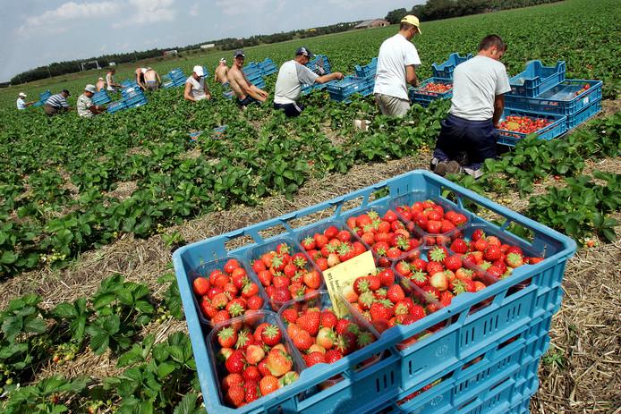 De Tweede Kamer vindt dat er al voldoende arbeiders zijn voor seizoengebonden werk.