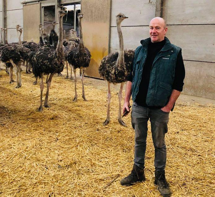 Bert Neirinck houdt de struisvogels van Schobbejaks Hoogte in hun kot.