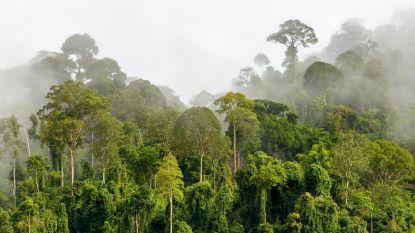 Hoe een reusachtig gordijn in Peru geheimen van het nevelwoud moet ontrafelen