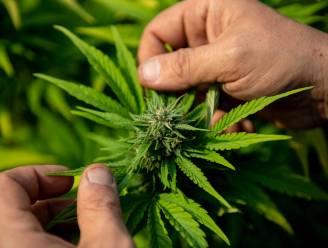 Moeder en zoon krijgen celstraffen voor handel in drugs