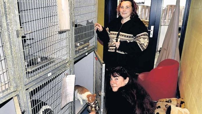 De kattenverblijven in het Gorcumse asiel zitten tjokvol. Cora Rikkelman en Eva Dansen (zittend) van de SP luiden de noodklok.