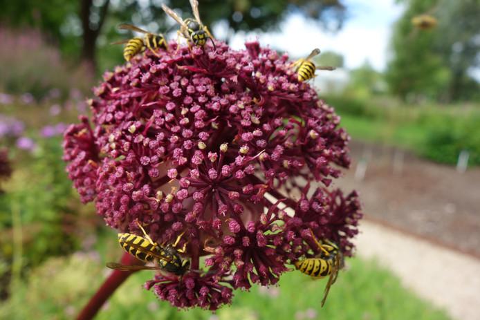 Een fraaie foto uit de Botanische Tuinen