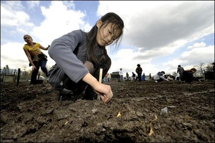 Een van de huurders van een volkstuintje op 't Zand is de montessorischool. Kinderen van deze school komen in het seizoen elke dinsdagmiddag in hun tuin werken.