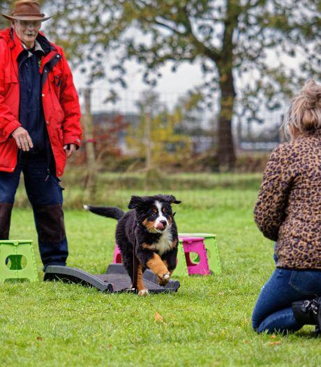 Zorg over honden die ontsporen: 'Veiligheidsregio moet groepslessen in Gelderland weer toestaan'
