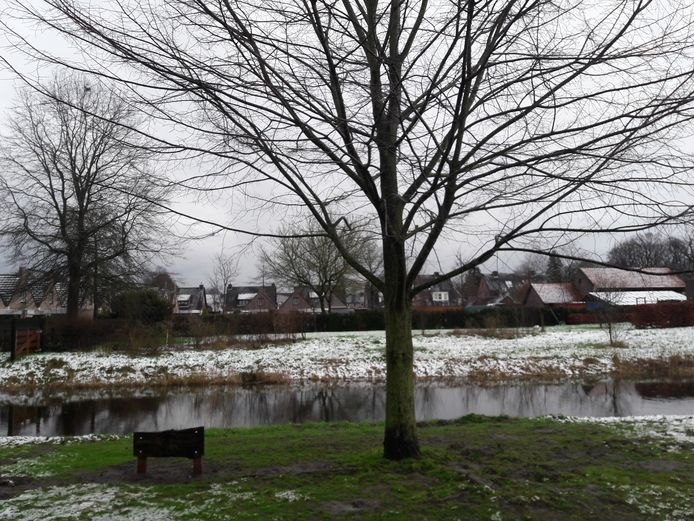 De fladderiep, langs de Reusel in Moergestel, was in tien jaar tijd al behoorlijk gegroeid. Het bord dat herinnert aan het planten in 2010 stond na een verdwijning vorig jaar weer naast de iep.