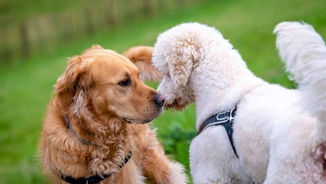 Hondenlosloopzone wordt uitgebreid