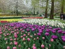 Tukkers naar de tulpen
