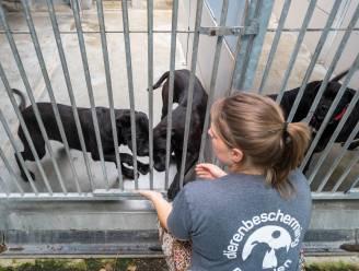 """Nog eens 41 honden opgehaald bij fokker waar eerder al 68 dieren werden gered: """"Weggehaald wat we konden"""""""
