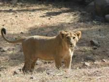WWF: aantal conflicten tussen mensen en wilde dieren bereikt zorgwekkend niveau