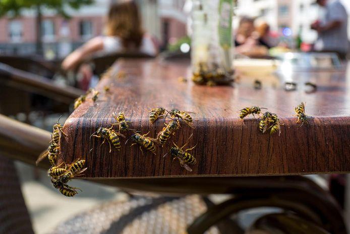 Vooral de cola en het bier op ons terras zijn aantrekkelijk voor wespen.
