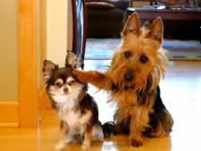 La dénonciation version canine