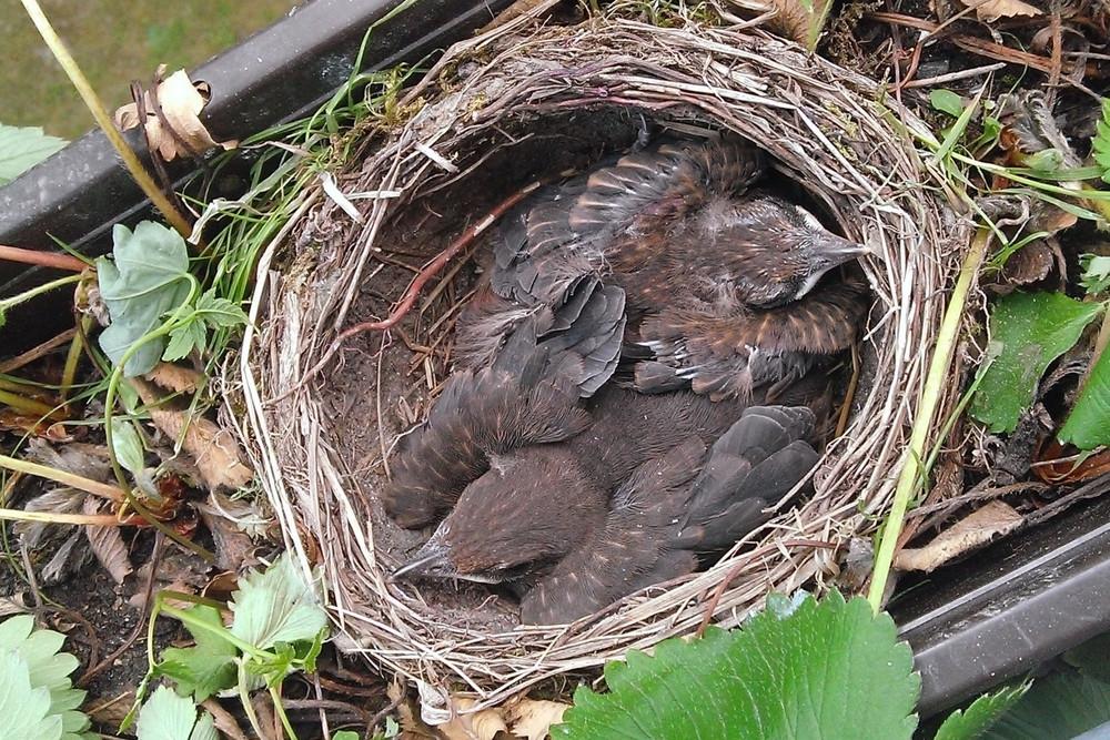 Het is belangrijk dat je vogels de ruimte geeft in de tuin, vindt Overbeek.