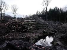Nieuw bos in Winterswijk ter compensatie van massale bomenkap