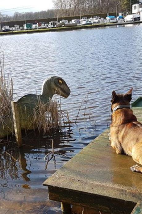 Monster van Loch Almelo? Politie treft dinosaurus in kanaal aan