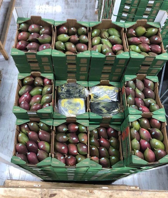De lading mango's waartussen de 1500 kilo coke was verstopt.