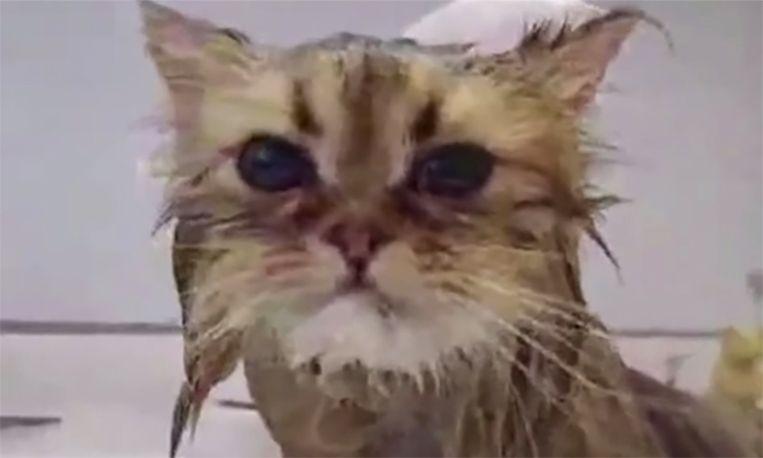Verrassend: deze katten houden wél van water!