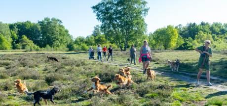 Verhitte discussie in Ermelo: past een hondenlosloopgebied in een beschermde natuurzone als de Groevenbeekse heide?