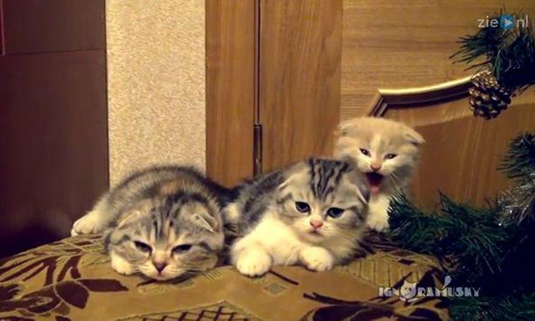 Schattig: gapende katjes
