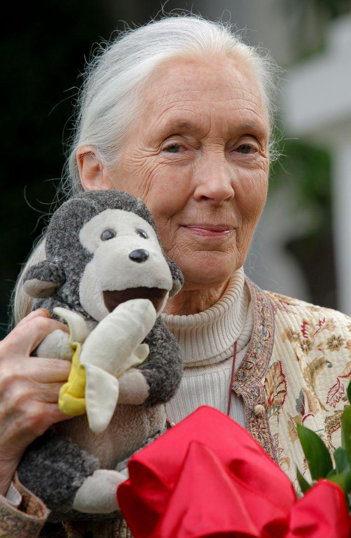 Jane Goodall en Mr. H. Beeld AP