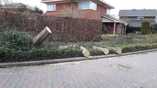 Op de Eelinkes in Winterswijk is een omgewaaide boom al verwerkt tot haardhout.